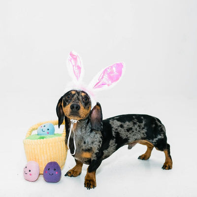 Hoppy Easter Gift Set-Puppy Care Package-Gift Spawt