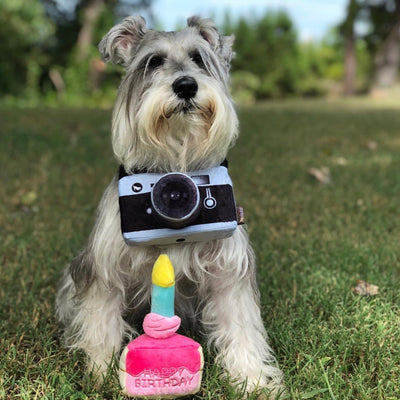 Lens Licker Camera-Plush Dog Toy-Gift Spawt
