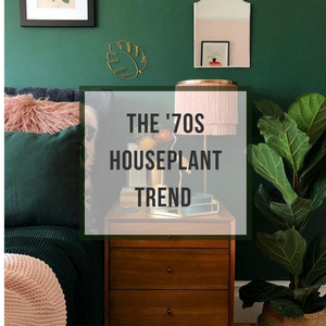 The '70s Houseplants are Back! And They are Groovy as Ever...