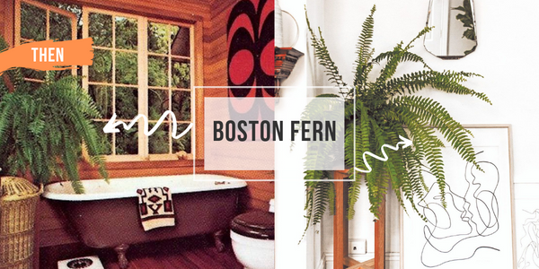 boston fern indoor houseplant in bathroom from 70s compared with another boston fern plant from 2018