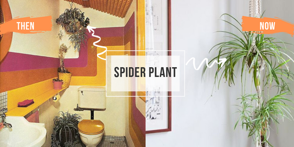 Spider Plant Hanging in a basket before and after interior design bathroom air plants