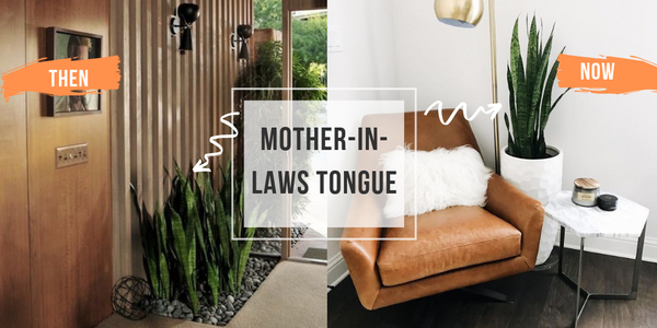 mother in laws tongue indoor houseplant compared to side by side 70s interior and recent interior trend blog