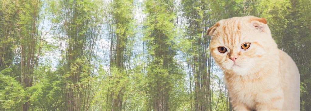 Should we be sceptical? Why bamboo is not antibacterial: