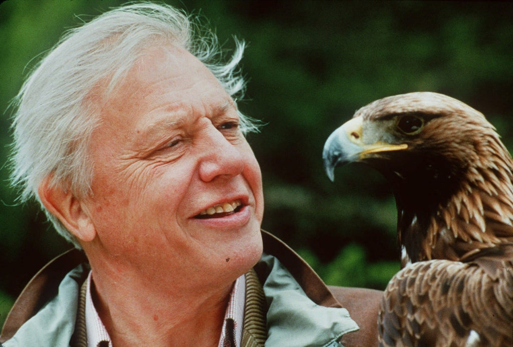 David Attenborough's top 45 quotes