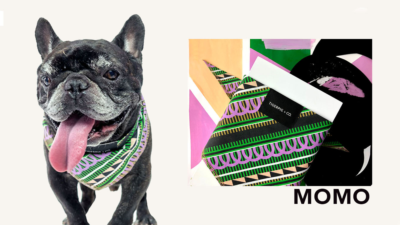 Tigerpig and Co Purple Green Black Graphic Dog Bandana_Momo