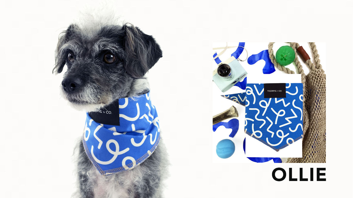 Tigerpig and Co Blue Dog Bandana_Ollie