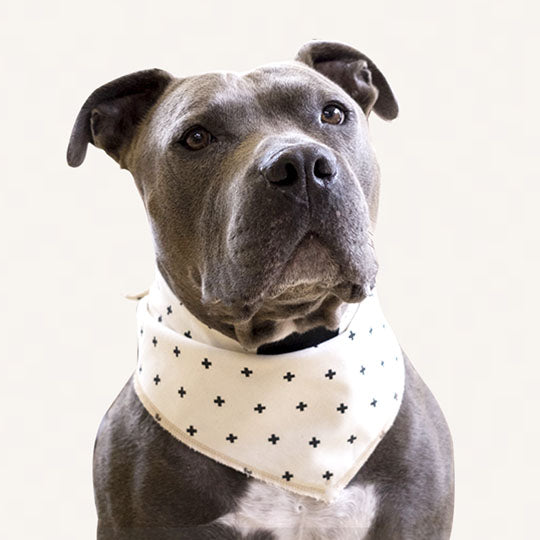 Barry - Dog Bandana