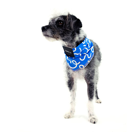 Ollie Blue - Dog Bandana