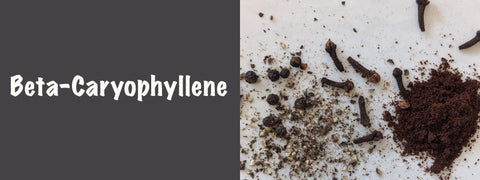 Beta-Caryophyllene is found in black pepper, rosemary, hops, cloves, and many other plants