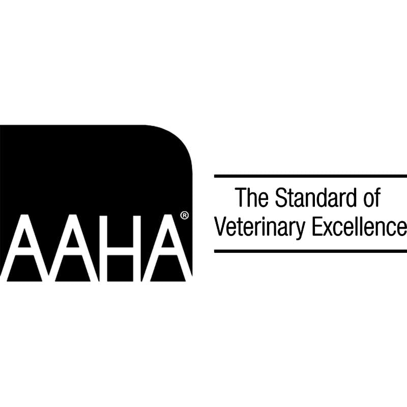 VetCS in The Standard of Veterinary Excellence