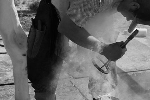 Photo of a farrier placing horseshoe on a horse