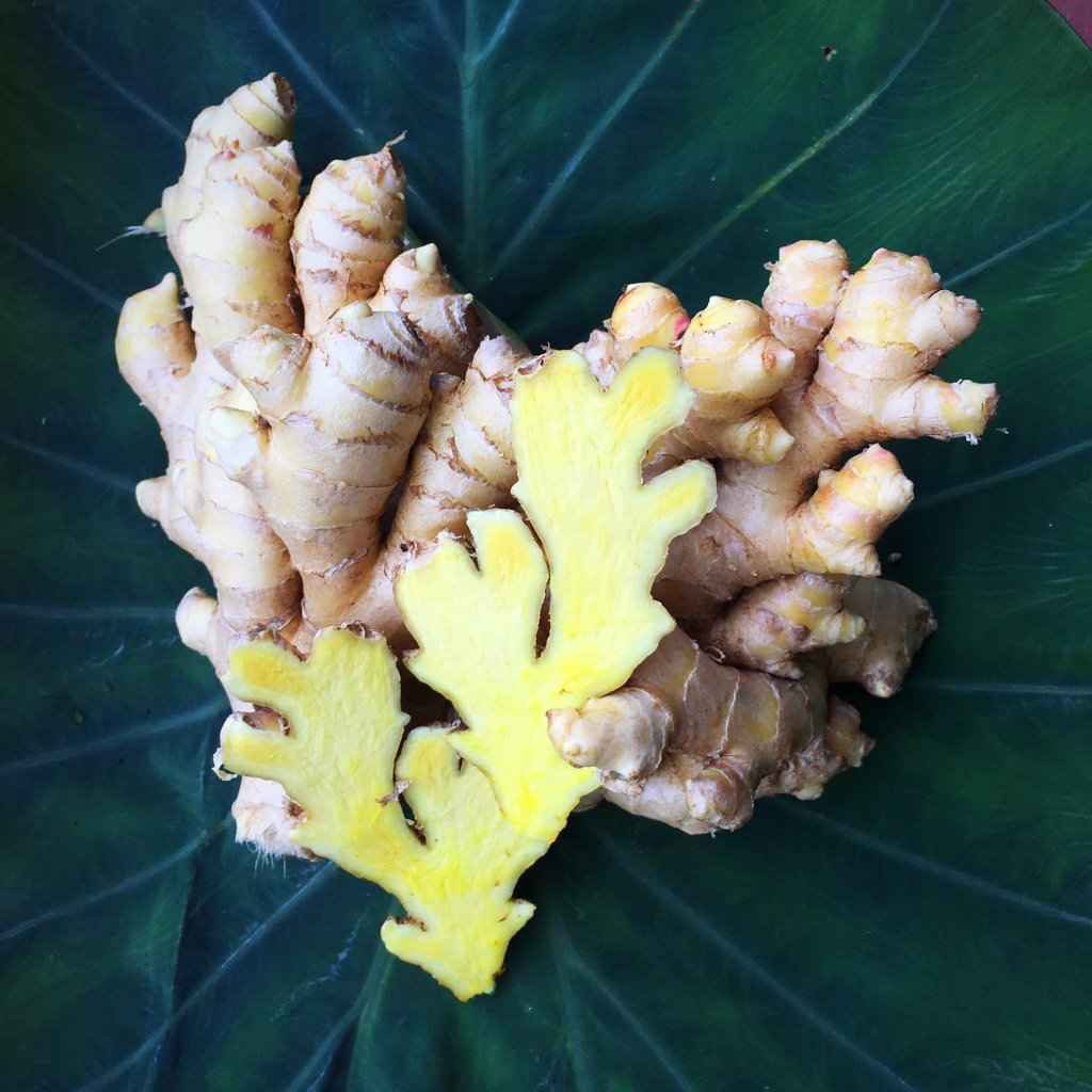 Organically grown, spicy fresh Ginger Root SOLD OUT!