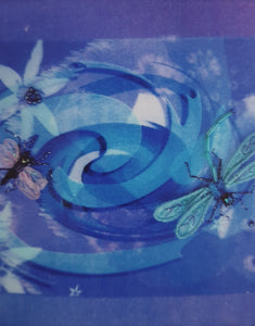 CC15 Dragonflies By Cindy Cooper