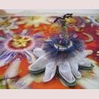 The Perfect Specimen Passion Flower Collage by Les Designs