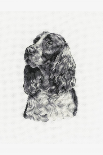 Springer Spaniel By Dmc
