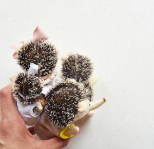 Hedgie Family