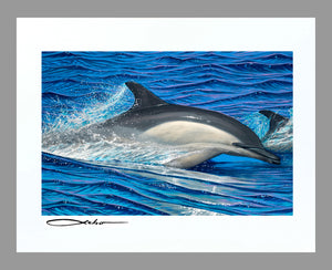 """Dolphin Blue"" 11"" x 14"" Matted Print"
