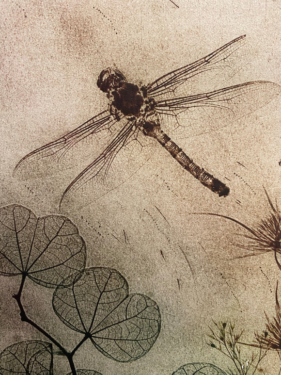 """Fly-Away Dragonfly"" Original Etching"
