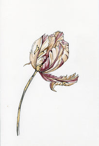 Day 18- Parrot Tulip