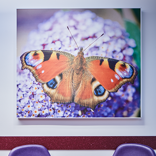 Image of butterfly on acoustic panel