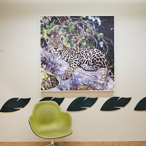 Image of leopard on acoustic panel in a waiting room