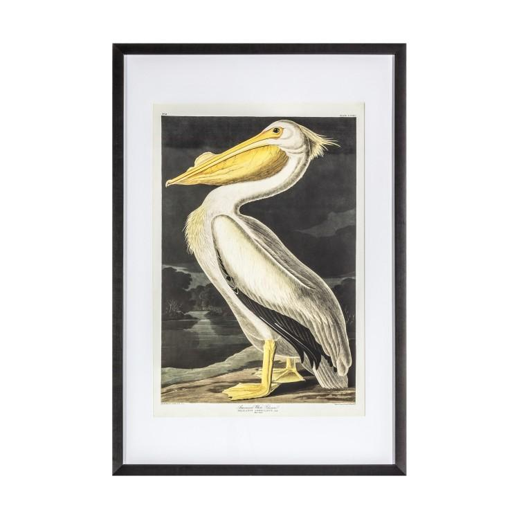 Gallery Direct Inquisitive Pelican Framed Wall Art | Outlet