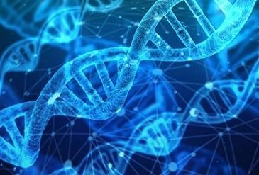 What does DNA contain?
