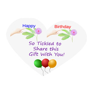 NEW! Birthday TickleMe Plant Gift Box Set! - TickleMe Plant Company, Inc