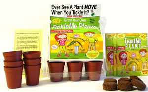 TickleMe Plant Deluxe Greenhouse Kit with 6 color Paint Set For Kids of all ages! - TickleMe Plant Company, Inc