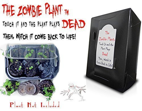 ZOMBIE PLANT GROW KIT- (Touch It and It PLAYS DEAD!) - Contains everything you need to grow your own Zombie Plants at home