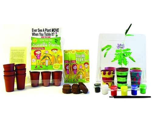 TickleMe Plant Deluxe Greenhouse Kit with 6 color Paint Set For Kids of all ages! - Includes 6 color acrylic paint set and paint brush.