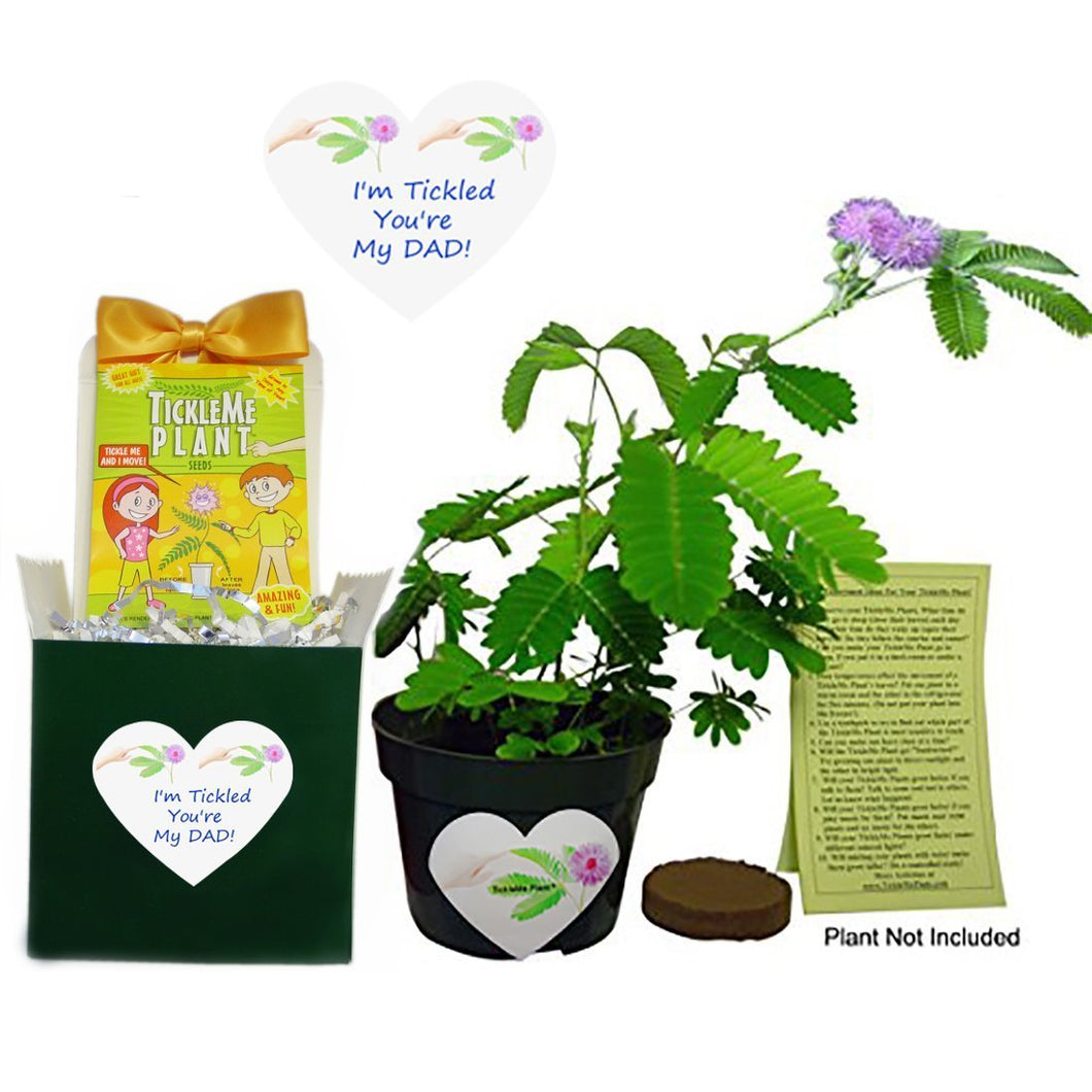 Birthday Gift or Father's Day Gift For Dad -TickleMe Plant Box Set - For the Dad that has everything