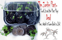 ZOMBIE PLANT GROW KIT- (Touch It and It PLAYS DEAD!) - TickleMe Plant Company, Inc
