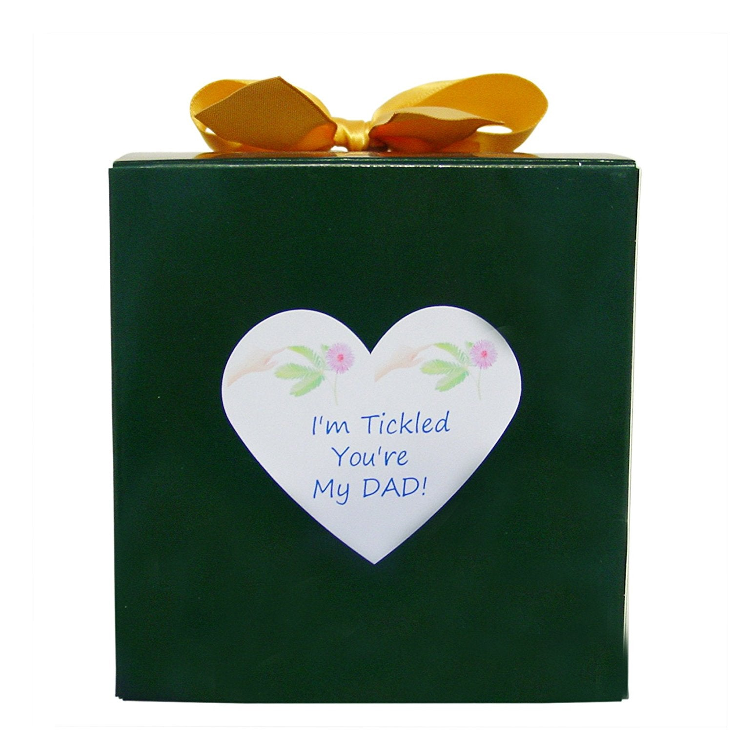 Birthday Gift Or Fathers Day For Dad TickleMe Plant Box Set