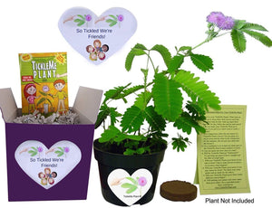 Friendship Gift Box or a Unique Birthday Gift - TickleMe Plant Friendship Gift Box set