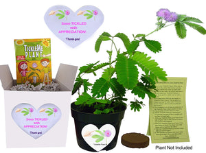 So Tickled With APPRECIATION TickleMe Plant Gift Box set! - TickleMe Plant Company, Inc