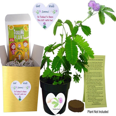 GET WELL GIFT PLANT - TickleMe Plant Gift Box Set! - Includes one packet of TickleMe Plant seeds, (Mimosa pudica) One soil wafer and on 4 inch flower pot