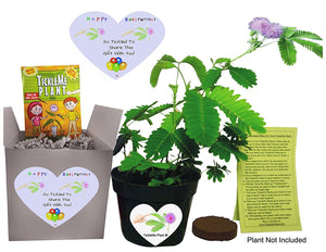 Say Happy Retirement - So Tickled To Share This Gift With You. - Includes soil wafer, TickleMe Plant seeds (Mimosa pudica) and a 4 inch flower pot