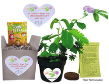 TickleMe Plant Anniversary Gift Box Set - To grow the TickleMe Plant that closes its leaves and lowers its branches when Tickled