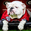 Georgia Bulldogs - UGA Chillin | College Football Mascot