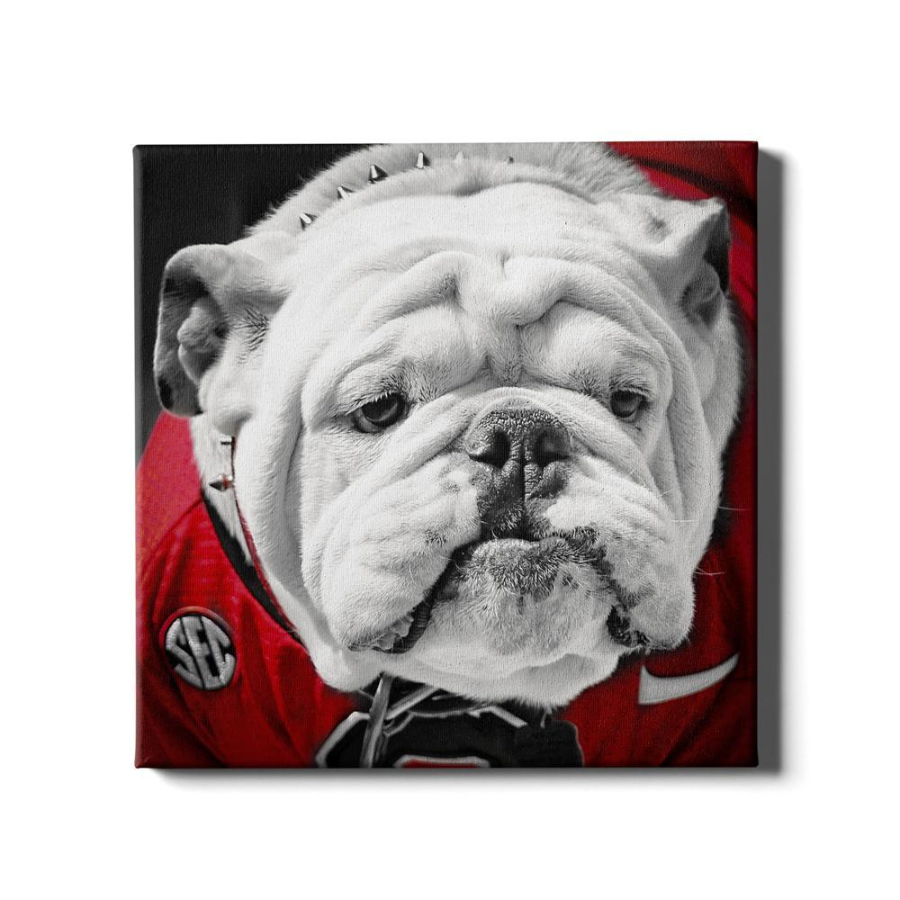 Georgia Bulldogs - Uga Close Up - College Wall Art #Canvas