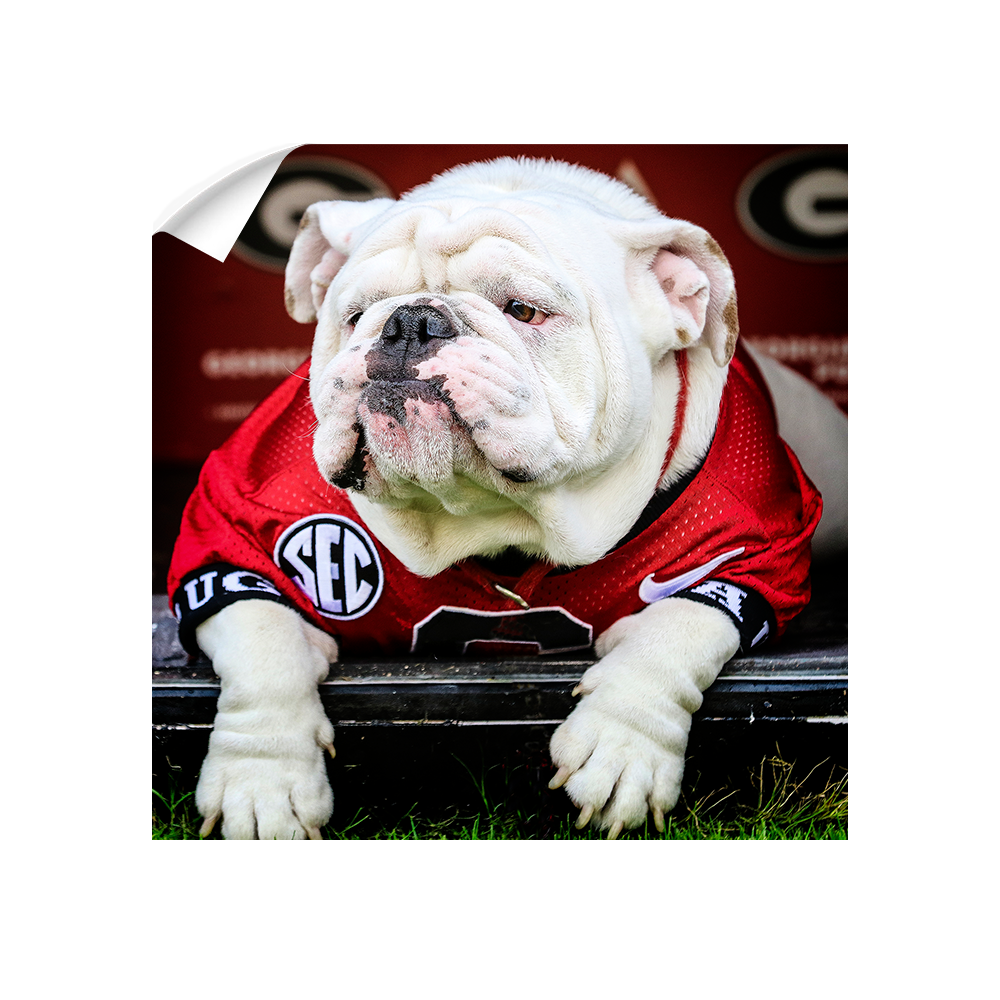 Georgia Bulldogs - Uga Chillin - College Wall Art #Canvas