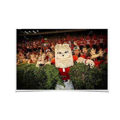 Georgia Bulldogs - Hairy in the Hedges - College Wall Art #Poster