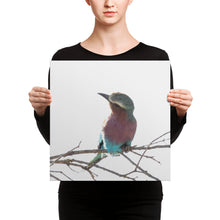 Lilac Breasted Roller Canvas