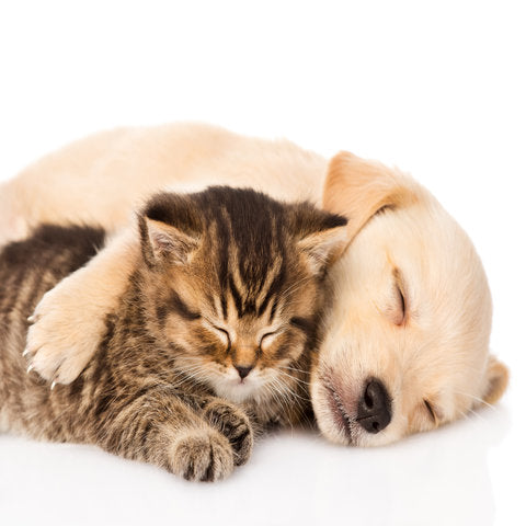 Pets Bed Pillows