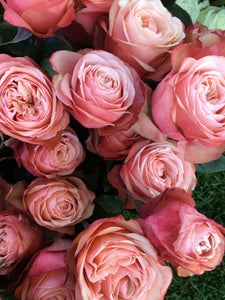 Kahala Roses {Pre-Order 2 weeks in advance} - Blushes & Blooms