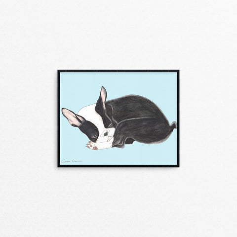Boston Terrier Nap Print