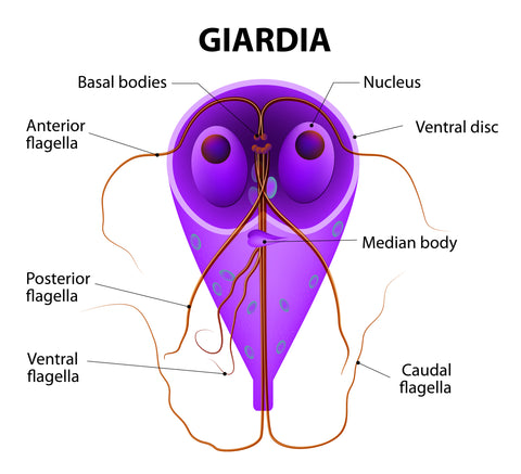 Water Filters to Remove Giardia
