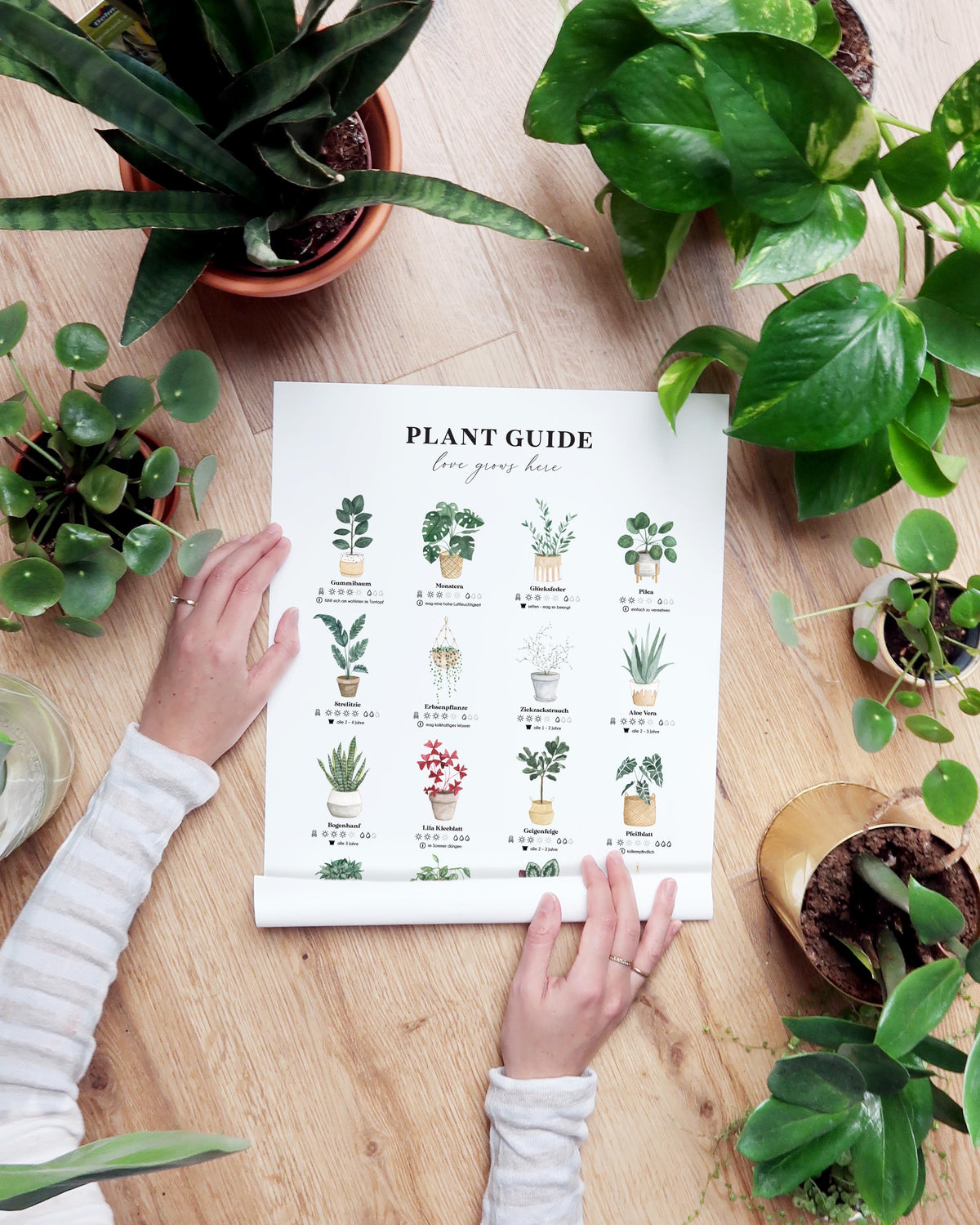 Print A3 Luvter Paper Plant Guide
