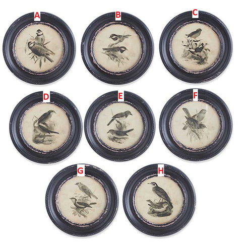 "9.75"" Assorted Round Black Framed Bird Prints! EIGHT Style Options!"